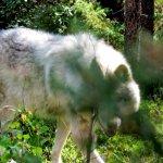 Northern Lights Wildlife Wolf Centre Foto