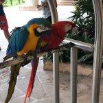 Tropical birds , great entertainment
