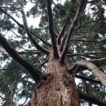 Royal Botanic Gardens Kew Foto