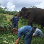 Grass-cutting activities for our elephant 200 KG./1 day