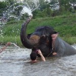 Bathing with elephant and have fun