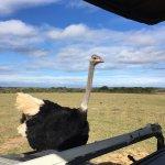 Mansfield Reserve Foto