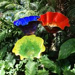 Besides the plants and flowers, they had glass sculptures by Dale Chihuly and his students.
