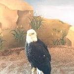 Photo of National Eagle Center