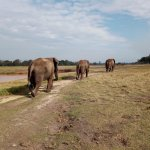Walk with elephants
