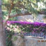 Poggio Aragosta Hotel & Spa Photo