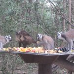 At a food station in Monkeyland