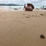 Hermit crab races on the beach