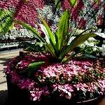 The Calyx, Royal Botanical Gardens of Sydney