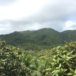 Photo of Vallee de Mai Nature Reserve