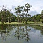 Photo of Champagne's Cajun Swamp Tours
