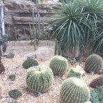 The Cacti Garden