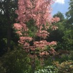 A Special Pink Tree!