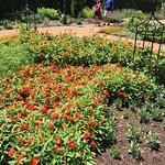 Foto de Missouri Botanical Garden