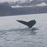 Whale Tail!!