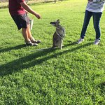 A wallaby encounter during one of the animal feeding times.