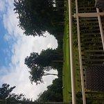 Foto di Forest Pines Hotel & Golf Resort - A QHotel