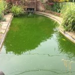 The ornamental pool
