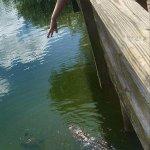 Fishing peir