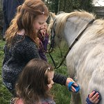 Pony grooming & riding time
