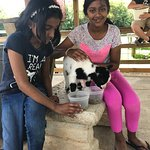 Photo de Luray Zoo - A Rescue Zoo