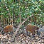 Photo of Zoo des Sables d'Olonne