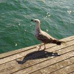 Foto de Rambla del Mar