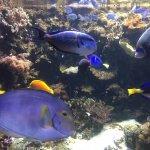 Peixes na parte interna do aquário