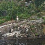 Pinguins - aérea externa
