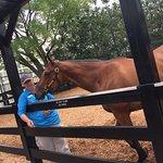 museum retired horse