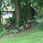Zdjęcie Brandy House Farm