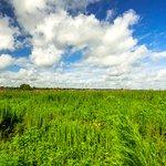 The actual prairie marsh.