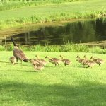 Family on the course