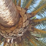 Photo of Occidental Menorca
