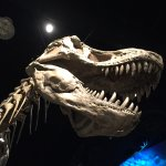 Royal Tyrrell Museum of Palaeontology Foto