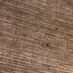 Here is a very small section of the carpet, with burns on it. I wish it was possiable for to sme