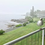 Friendly seagull (there were only a few, not pests at all)