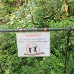bridge to hiking trail
