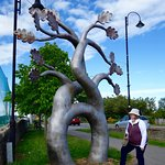 The Matrimonial Tree in Ballybofey