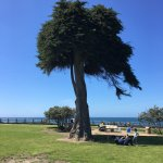 One of the beautiful trees at the park adjacent to the beach.