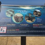 Introduction to the seals and seal lions.