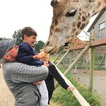 grandpa and grandson feeding one of the giraffes