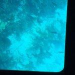 Foto de John Pennekamp Coral Reef State Park
