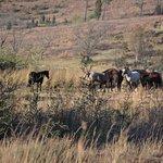 Wild Horses Lodge Foto