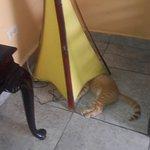 Este gato se encontraba por todas partes ensuciando con heces y orine.