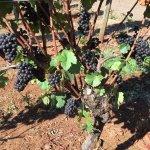 Photo de Wine Country Farm