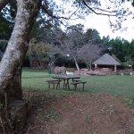 Kudu wandering around one of the pool areas
