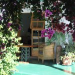 One of the many bougainvillea trees on the grounds, over looking Room 3.