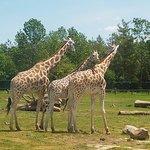 Tall trio