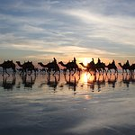 Sunset behind the camels…..beautiful.
